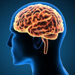 Researchers unearth secret tunnels between the skull and the brain