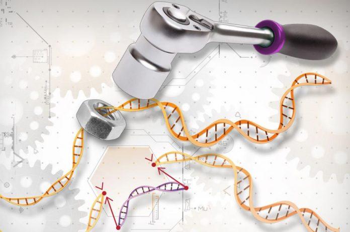 Study: Prenatal gene editing treats congenital disease in mice