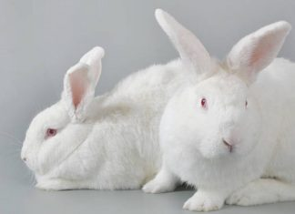 Is vegan testing the latest step towards cruelty-free beauty?