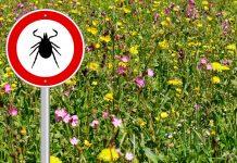 Lyme et maladies transmissibles par les tiques : mise au point