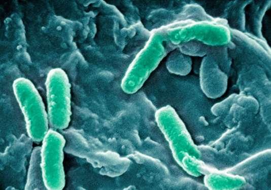 Les bactéries résistantes aux antibiotiques ont fait 33 000 morts en Europe en 2015
