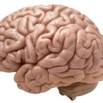 High blood pressure, diabetes and obesity each linked to unhealthy brains