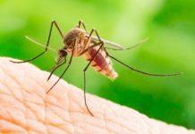 FDA authorizes marketing of first diagnostic test for detecting Zika virus antibodies