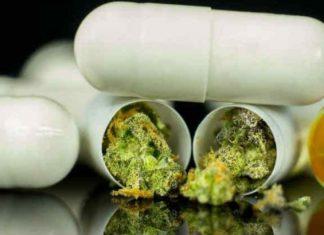 Cannabis à visée thérapeutique en France : Projet de cadre de la phase expérimentale de mise à disposition - Point d'Information