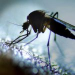 Malaria cases remain at highest level since 2011