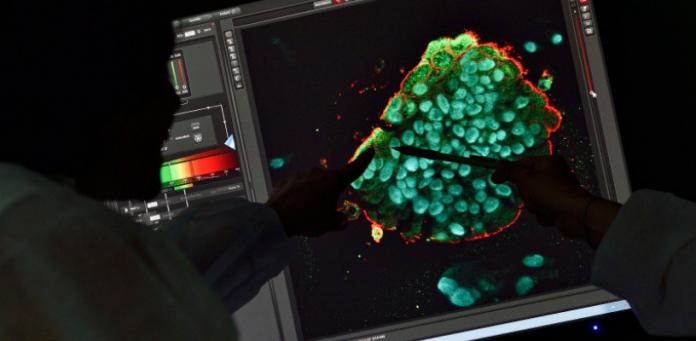 Les Organoïdes supplantent désormais les méthodes In Silico dans la R&D