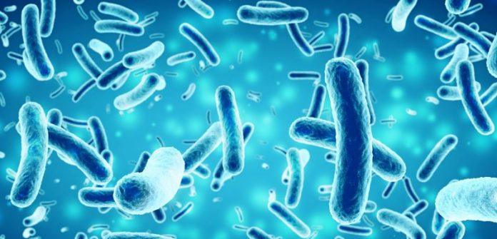 Le microbiote intestinal, une source de traitements contre le diabète